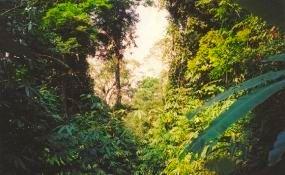 Khao Lak-Lam Ru forest